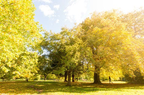 Trees with autumn golden yellow leaves in the sunshine