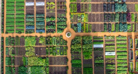 Aerial View of Kitchen Garden at Hampton Court Palace showing planting beds