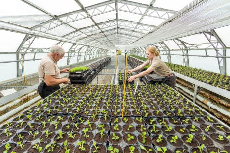 The Glasshouse Nursery. Showing Garden and Estates team members Stuart Birnie and Amy Borthwick setting out rows of potted seedlings. Behind Amy the seedlings stretch the entire length of the Glasshouse.