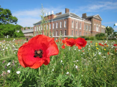 The East Front Gardens wildflower meadow, showing a close up view of red poppies (Papaver rhoeas), 2 July 2019. Looking north-west towards the East and South Fronts.