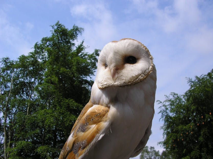 January Wonder Weekend Image by Mike Gibb. Consent confirmed via telephone with Maria Magill. Image of a Barn Owl not to be used in conjunction with any other event.