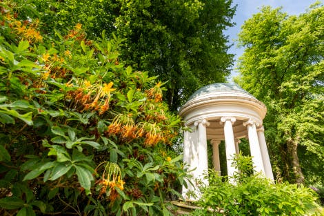 A low angle view of Lady Alice's Temple, surrounded by summer foliage and yellow flowers. 
