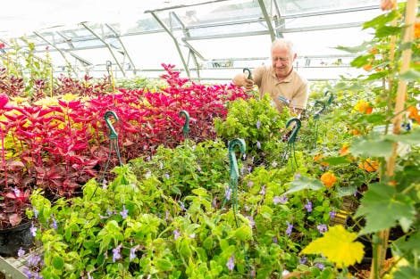 The Glasshouse Nursery. Showing Stuart Birnie, member of the Garden and Estates team, looking after a variety of summer bedding plants.