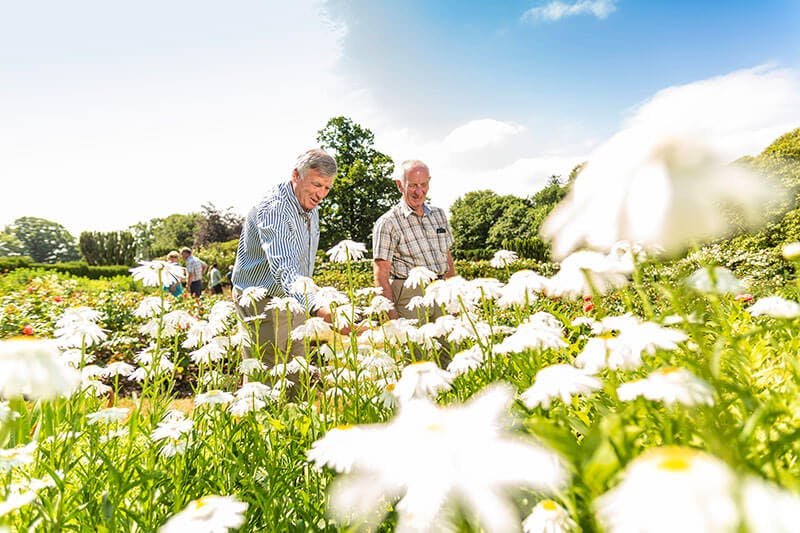 Two male visitors look at white flowers in a lush green garden under a blue sky in the summer