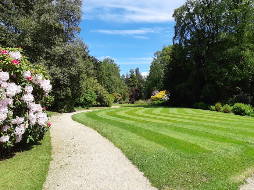 The Glen Lawn, 22 May 2019. Showing pink rhododendrons in bloom on the left of the image.