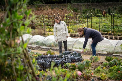 Visitors looking at the vegetables growing in the Walled Garden