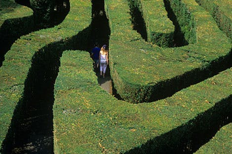 Overhead shot of a woman in the Maze at Hampton Court Palace.