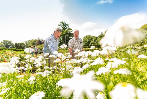 Two gentlemen and a group of visitors enjoy a wander through a garden on a sunny Summers day at Hillsborough Castle. The westerly facade of the castle is visible in the background.