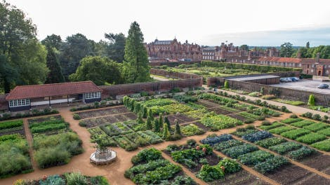 Aerial Vue of Kitchen Garden at Hampton Court Palace showing planting beds - looking towards West Front of palace.