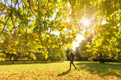 Autumn in the Wilderness at Hampton Court Palace, showing trees that are turning orange in the autumn sunshine. A visitor can be seen walking through the trees.