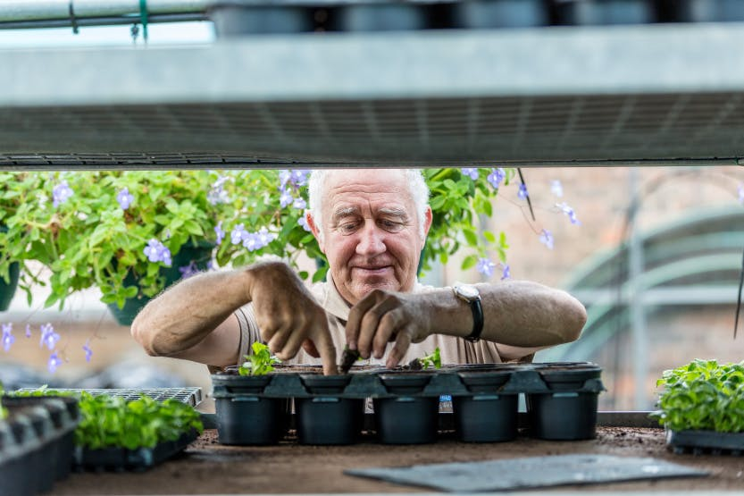 The Glasshouse Nursery. Showing Garden and Estates team member Stuart Birnie working in the Nursery. Stuart is seen planting seedlings into a tray.