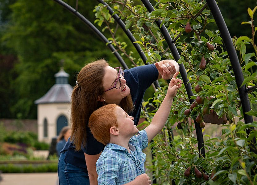Adult and child looking at plants in the Walled Garden
