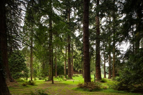 A general view of tall conifers in the Pinetum.