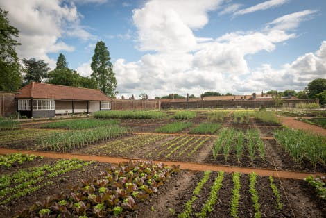 The Kitchen Garden looking south, 4 June 2014. Showing an overview of the vegetable plots set out in a grid pattern.