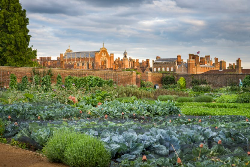 The Kitchen Garden looking south east Established in the late 17th century, the Kitchen Garden at Hampton Court produced vast amounts of fruit and vegetables for the royal table. Today, the garden has been re-created to its 18th century heyday, using the planting pattern laid down by the palace's Georgian gardeners.
