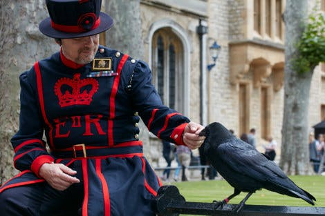 The Tower of London Deputy Ravenmaster attends to a raven with Tower Green and the Chapel of St Peter ad Vincula in the background.