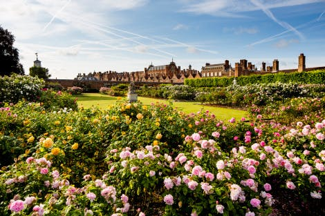 The Rose Garden with bright colour planting in the foreground and green lawn in the centre of the image, looking back towards the Tudor palace