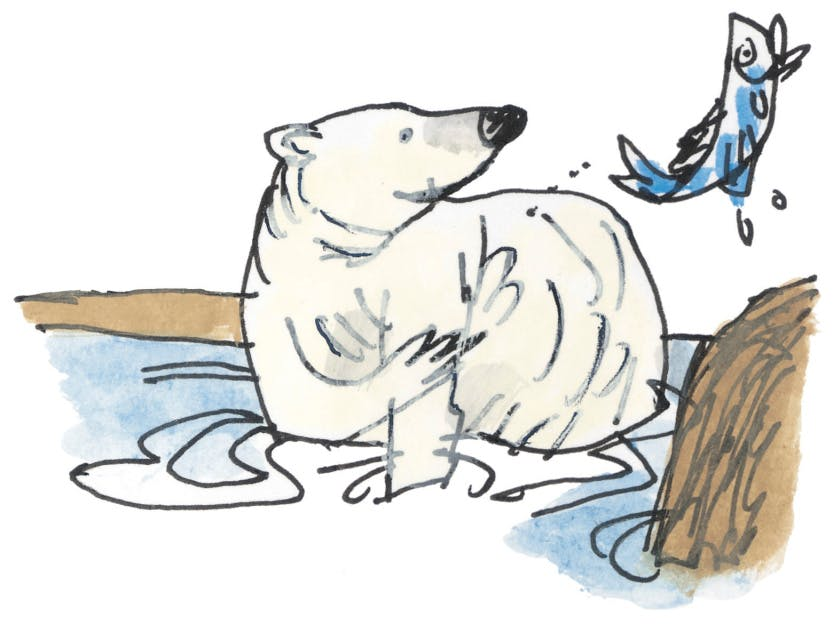 An illustration showing a polar bear in the River Thames with one paw in the water and one reaching for a fish which appears to have been tossed a little way above the polar bear's head