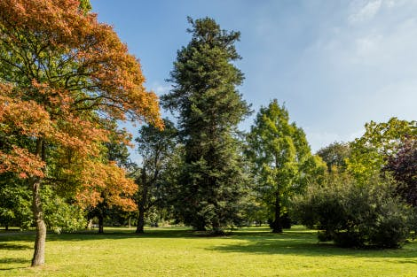 The Wilderness garden, showing trees beginning to turn autumnal and a blue sky.