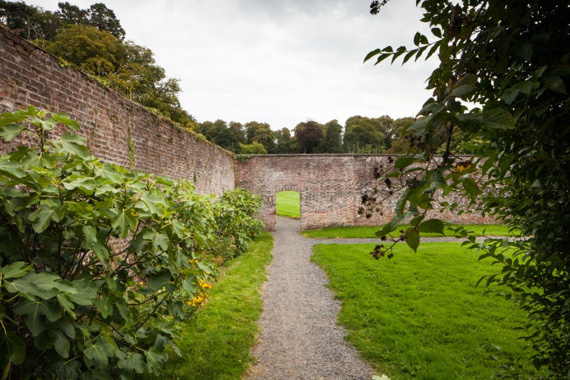 The Walled Gardens, looking along a pathway towards an open archway. Fig trees are growing along the wall on the left hand side.