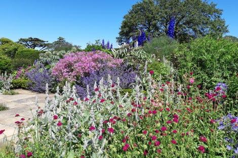 South terrace flowers