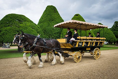 Two horses draw a carriage in the gardens of Hampton Court Palace