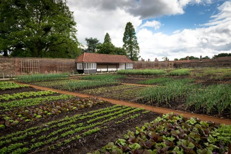 The Kitchen Garden looking south-east, 4 June 2014. Showing an overview of the vegetable plots set out in a grid pattern.