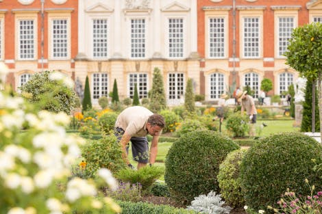 The Privy Garden, looking north. Showing members of the Garden and Estates team gardening. A male gardener is bending and using garden shears in the foreground.
