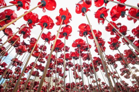A close view of some of the 888,246 ceramic poppies that form the 2014 Blood Swept Land and Seas of Red poppy installation, representing each of the commonwealth servicemen and women killed in the First World War.