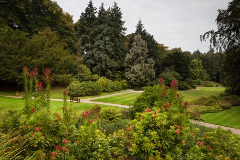 The Main Lawn. Showing shrubs in the foreground and trees seen across the lawn.