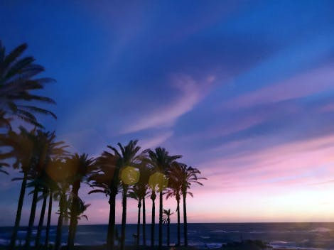 Palm trees on beach against a dark blue sky during sunset, in Motril, Spain.
