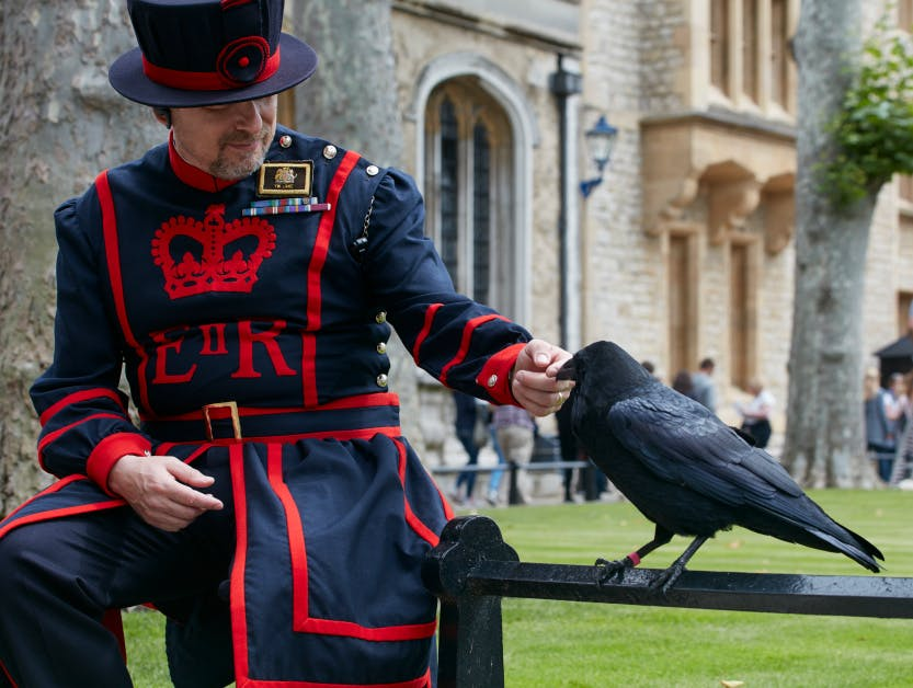 A Tower raven and a Yeoman Warder, the Deputy Ravenmaster
